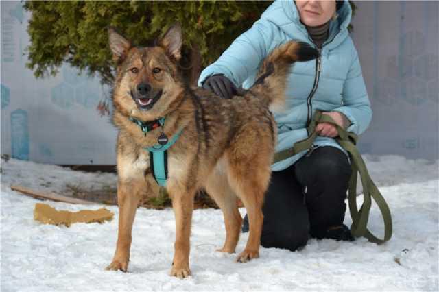 Отдам даром: Молодая собачка Динга ищет семью