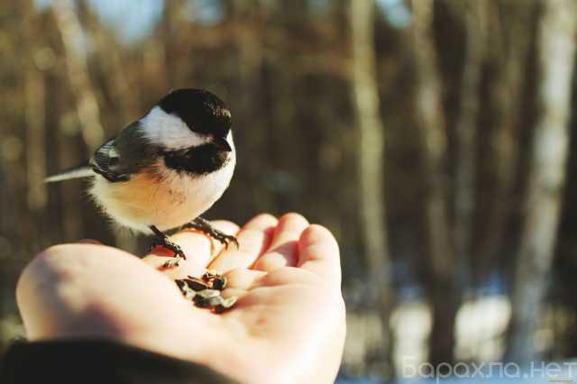 Продам: Птицы на выпуск на праздник(Благовещение