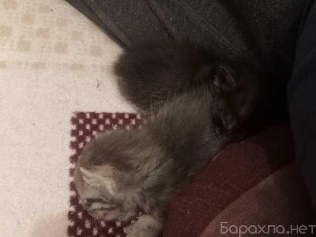 Отдам даром: Котята