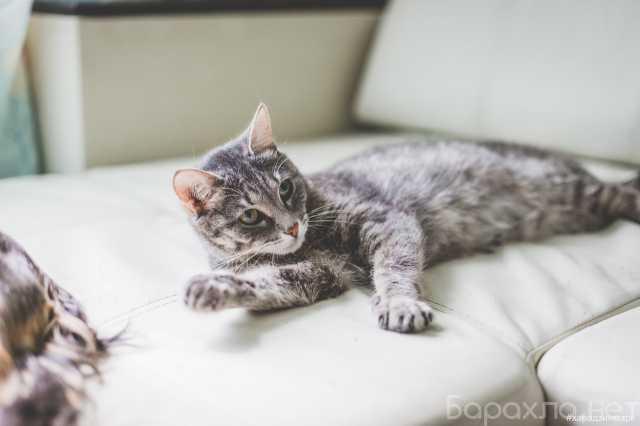 Отдам даром: Серая кошка Мальта ищет дом!