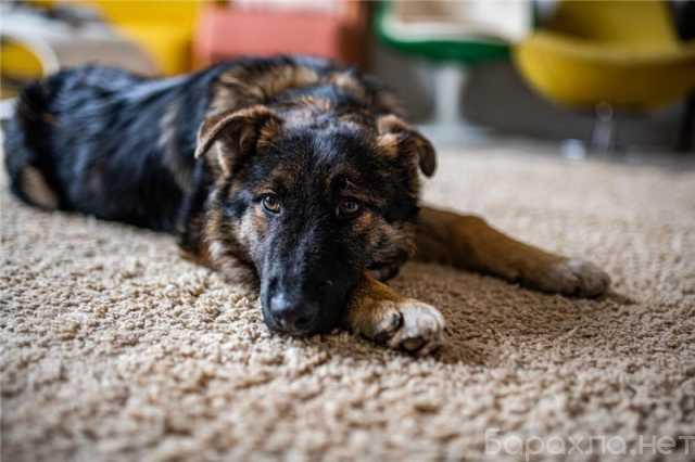 Отдам даром: Привет! Классный щенок ищет свой дом