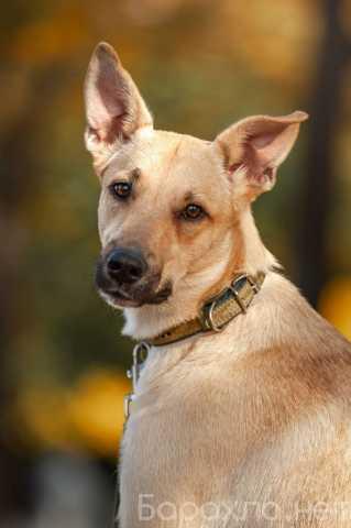 Отдам даром: Ассоль - жизнерадостная, молодая собака!