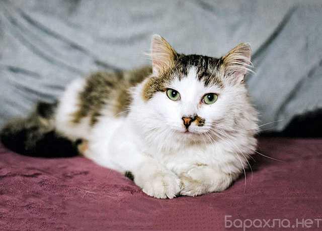 Отдам даром: любящий людей молодой котик Бакс (Подроб