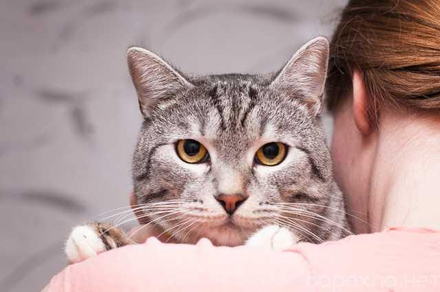 Отдам даром: Кот Красавчик ищет дом
