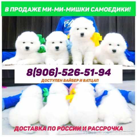 Продам: Красивые самоеды щенки
