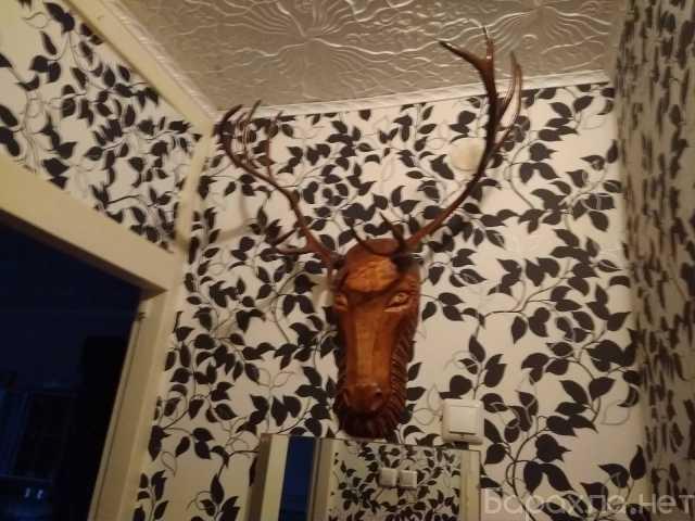 Продам: Рога Северного оленя