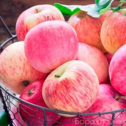 Продам: Саженцы плодовых деревьев по низким цена