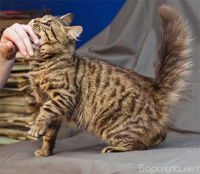 Отдам даром: Особенный молодой котик Маркус (Подробне