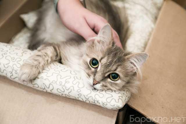 Отдам даром: молодую кошечку Стичи