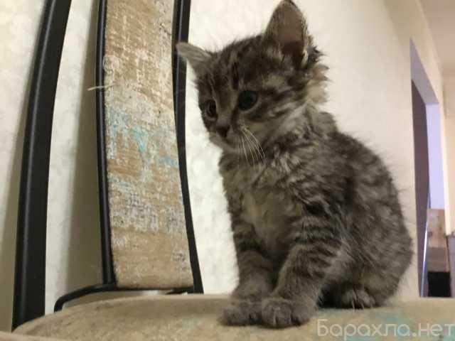 Отдам даром: котенок девочка 1 месяц