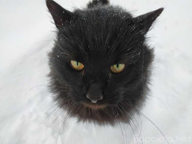 Отдам даром: Черный кот