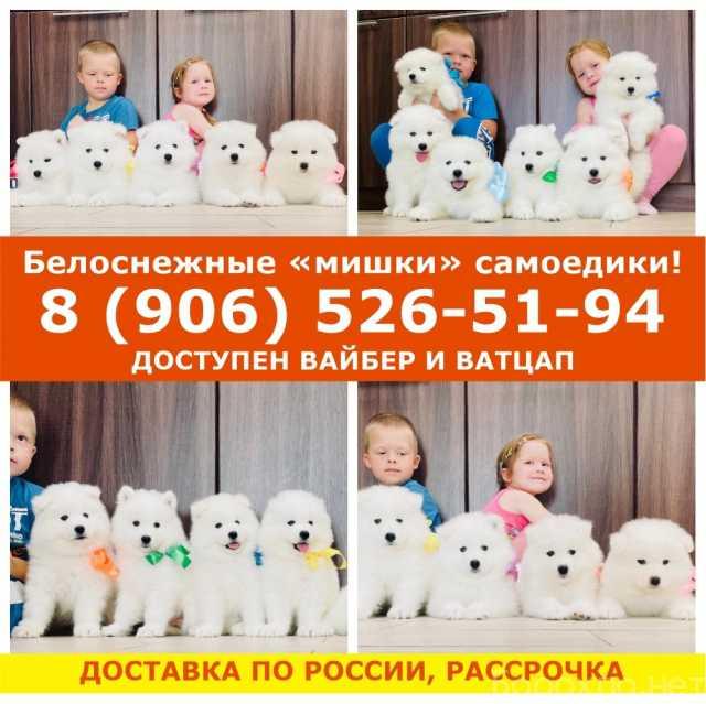 """Продам: Белоснежные """"мишки"""" самоедики"""