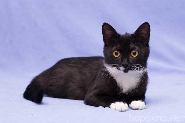 Отдам даром: Котенок Наоми в добрые руки