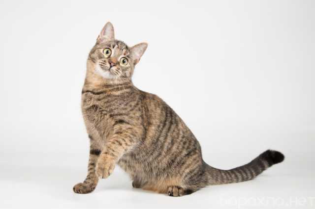 Отдам даром: Котенок-девочка, ласковая игрунья Стеффи