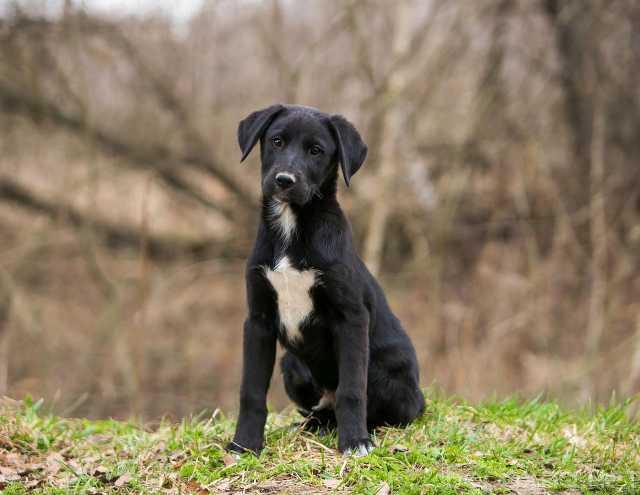 Отдам даром: 3 красивых щенка ищут дом
