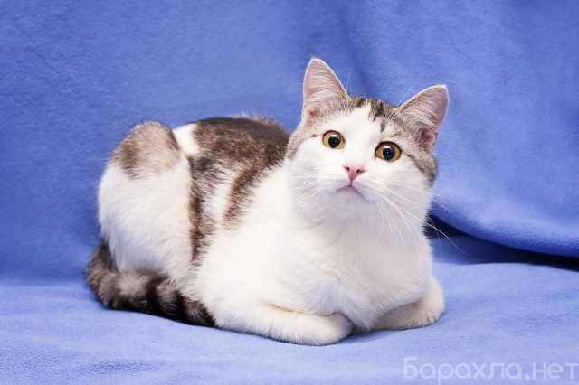 Отдам даром: Котенок Ластик в добрые руки