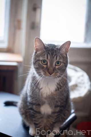 Отдам даром: Кот Меся в дар