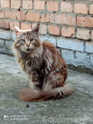 Отдам даром: Кошка