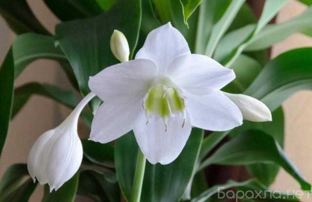 Продам: Комнатные растения