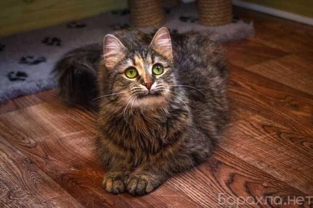 Отдам даром: Кошечка Пелагея в поиске дома и семьи!