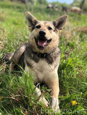 Отдам даром: Активная, энергичная собачка Лада В дар