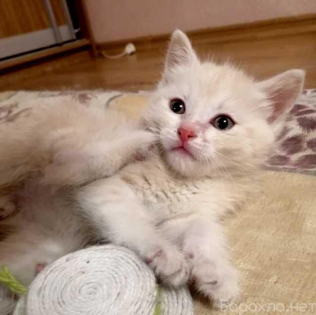 Отдам даром: Малыш Абрикосик, котенок 1,5 мес в дар