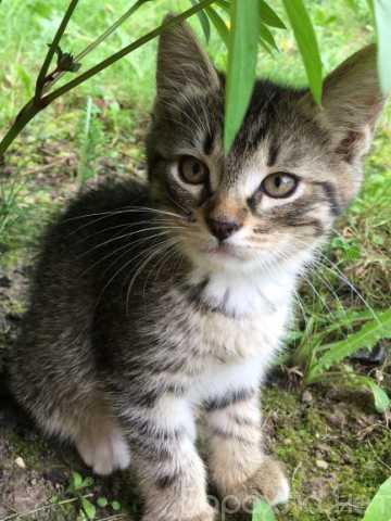 Отдам даром: Котята ищут дом