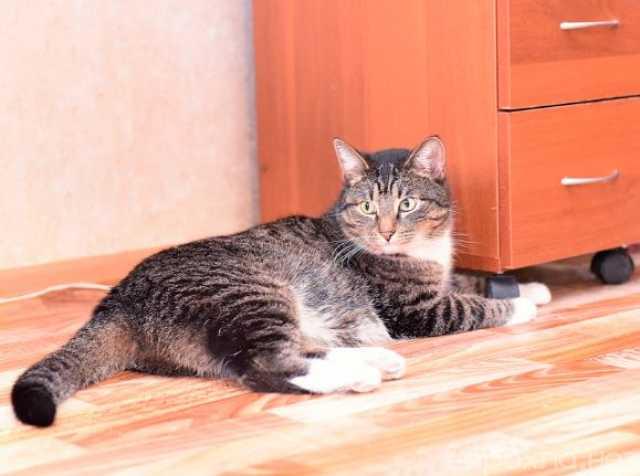 Отдам даром: Брутальный кот Тимофей ищет дом