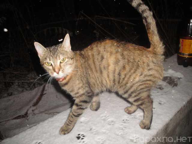 Отдам даром: Кошка в добрые руки