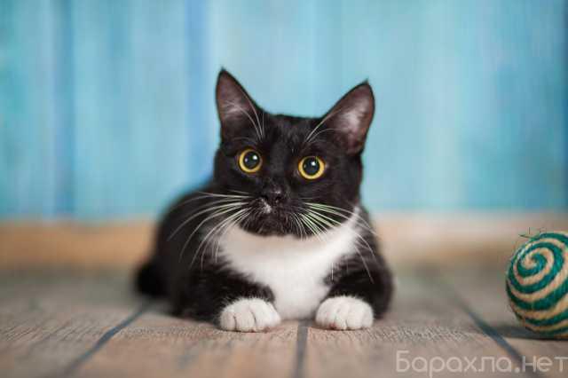 Отдам даром: Котенок-девочка Маркиза в добрые руки