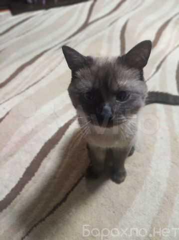 Отдам даром: голубоглазого котика