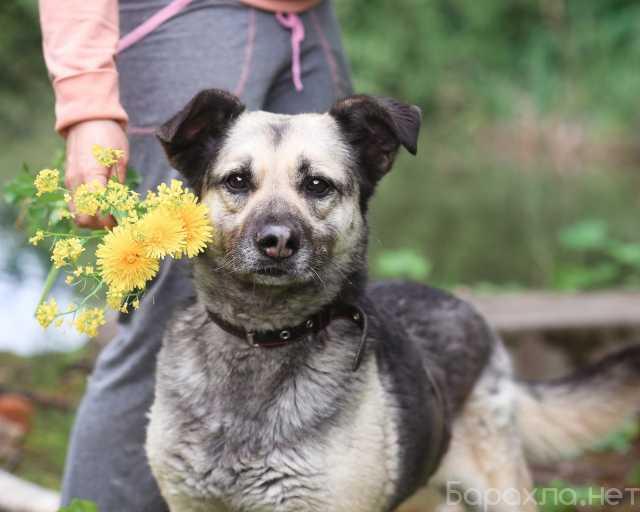 Отдам даром: Юна- собака-улыбка