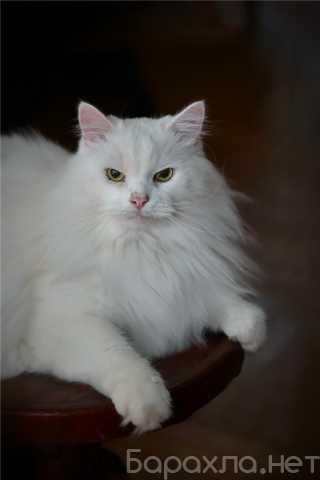 Отдам даром: Котик Шурик ищет семью