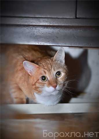 Отдам даром: Ищет свое счастье кот Рыжик