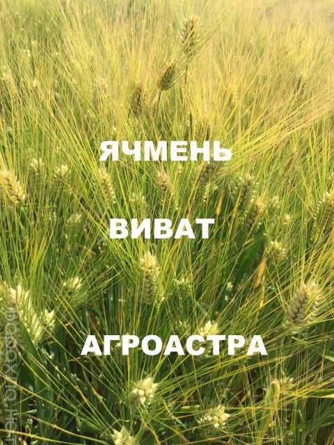Продам: Семена озимого ячменя ЭС