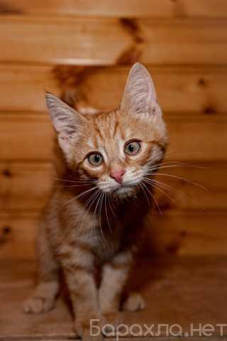 Отдам даром: Три замечательных красивых котенка
