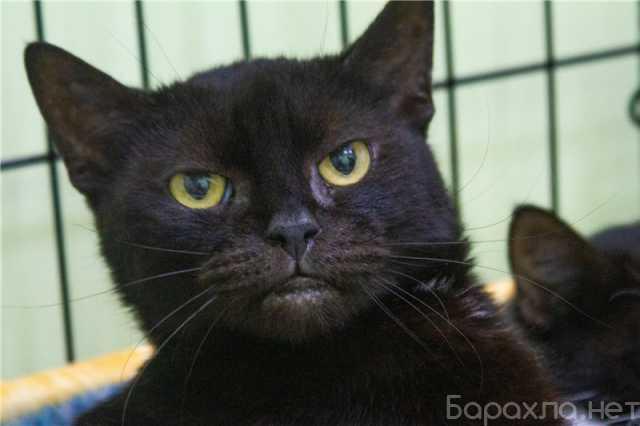 Отдам даром: Очаровательный котик Годзик ищет семью