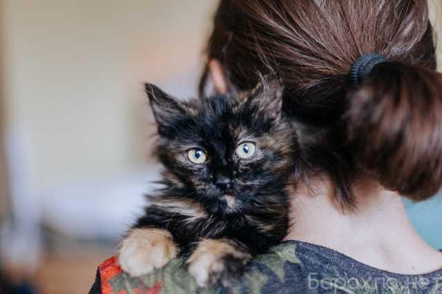 Отдам даром: Пушистый котёнок Лисёнок в добрые руки