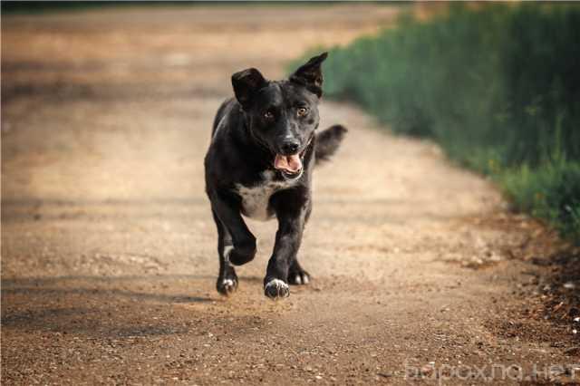 Отдам даром: Молодая собака Шарлиз ищет дом