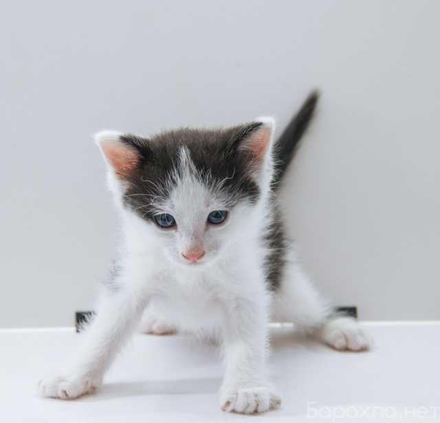 Отдам даром: 2 очаровательных котенка в дар