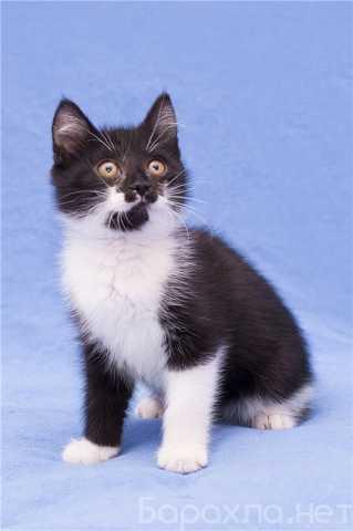 Отдам даром: Котенок Марсель в поисках дома
