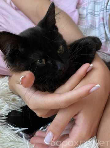 Отдам даром: Котенок Блэки в поисках дома