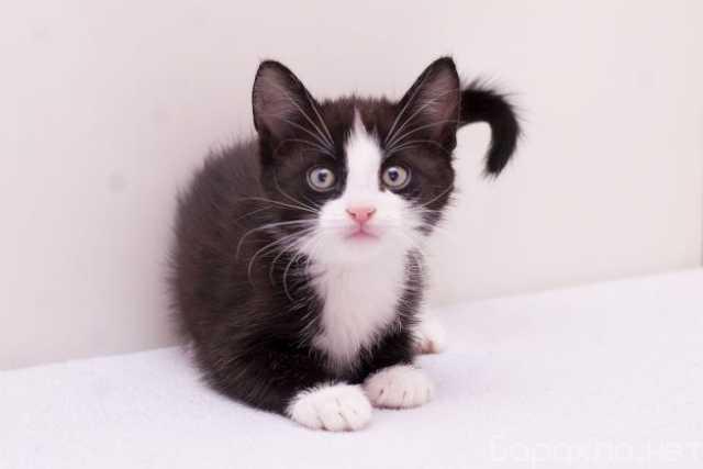 Отдам даром: Котенок Верочка в добрые руки