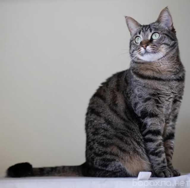 Отдам даром: Очаровательная кошечка Муся ищет дом