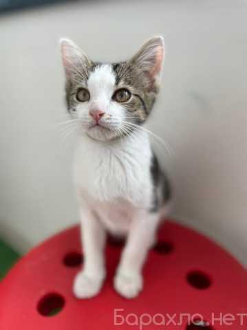 Отдам даром: Милый котик Джорджик в добрые руки