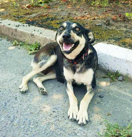 Отдам даром: Небольшая собака охранник