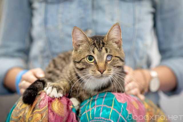 Отдам даром: Ласковый кот Честер в поисках дома