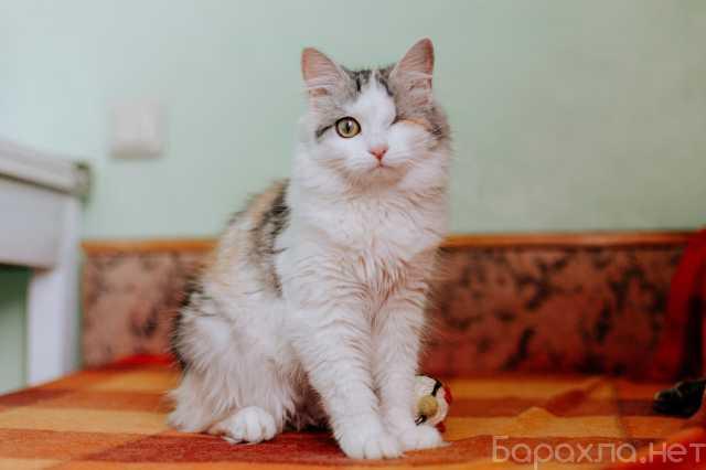 Отдам даром: Трехцветная и необычная кошечка Юкки в д