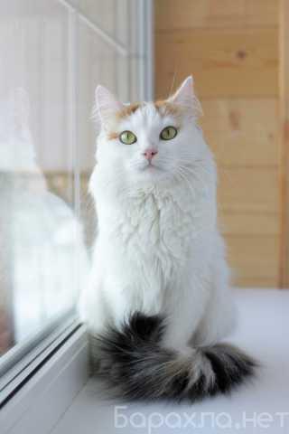Отдам даром: Кошечка Фанта ищет ответственных хозяев!