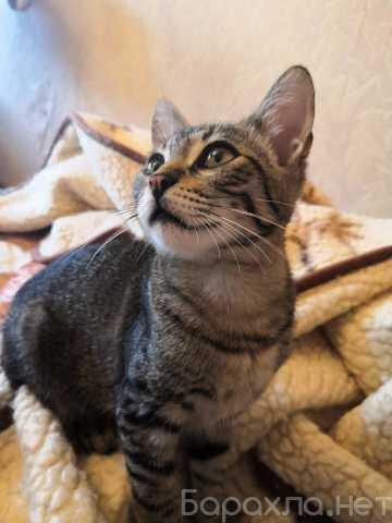 Отдам даром: Отдаем котят в добрые руки!